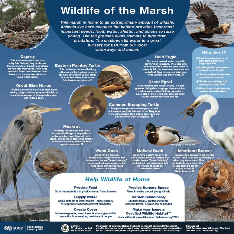 DEEC Wildlife Informational Panel