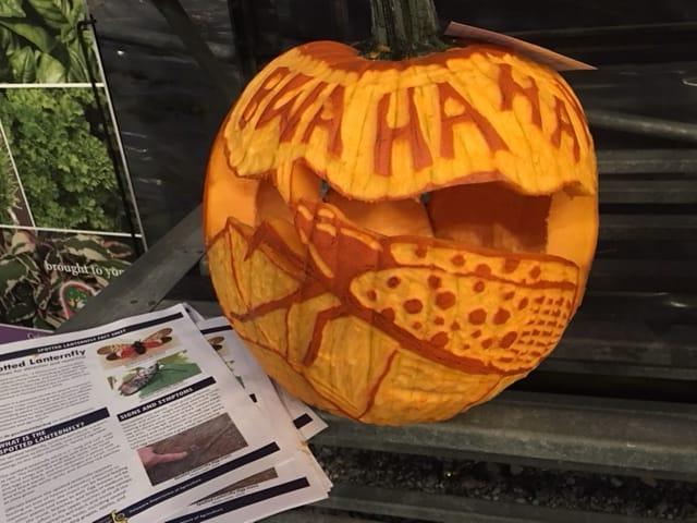 Lantern Fly Pumpkin Carving